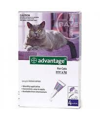 """אמפולות אדוונטג' לחתול גדול מעל 4 ק""""ג-0"""