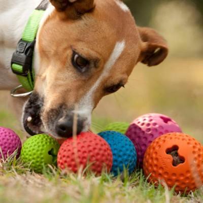 צעצוע לכלב רוגז כדור גומי לעיסה גדול צבע אדום-2394