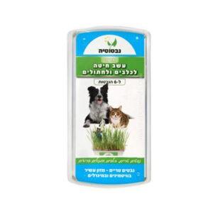 נבטוטיה - סט לגידול דשא לכלבים וחתולים-0