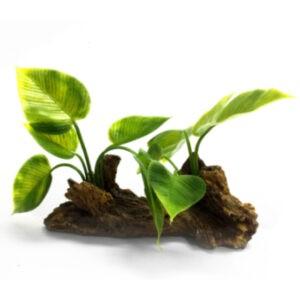 דקורציה לאקווריום גזע עם צמח