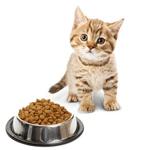 מזון יבש לחתול