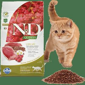 nd cat